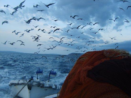 Ribarenje