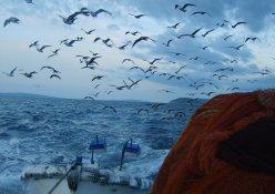 Ribari Petrići