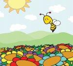 Pčelac Majo