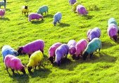 Hrvatsko stado bez pastira