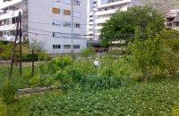 Čepića vrtli